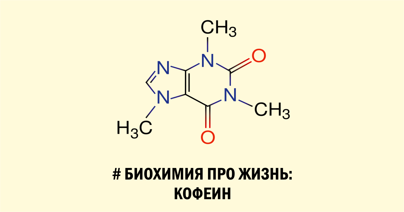 Биохимия про жизнь: кофеин
