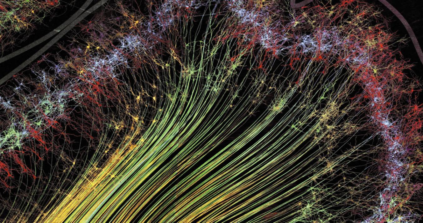 Нейроны и привычки