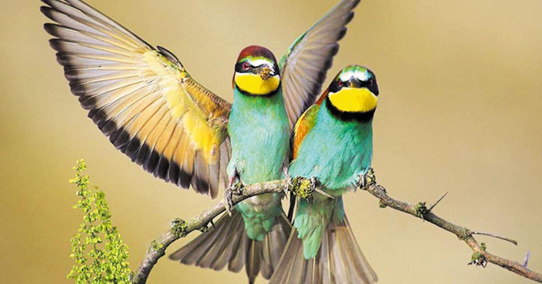 Птица, падающая в гнездо (Ци Мэнь Дун Дзя)